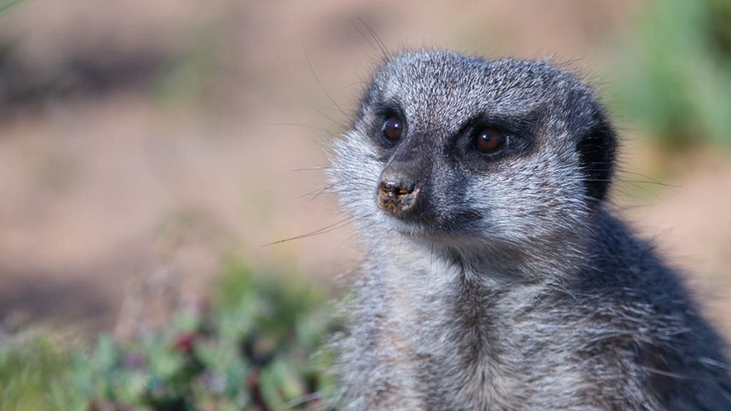 Day 14–Meerkats, Monkeys and More