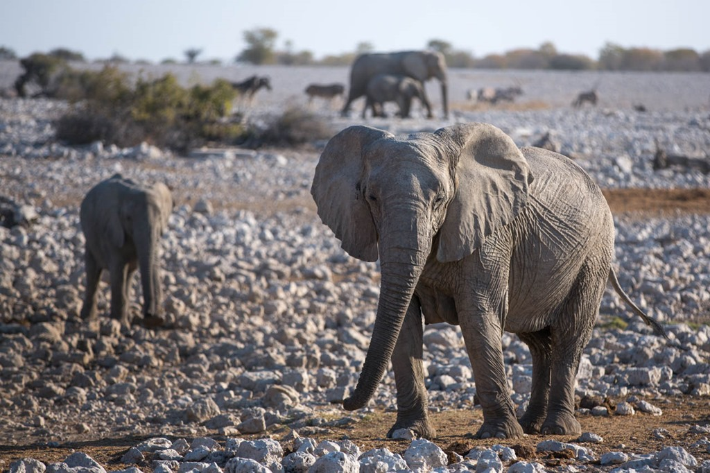 Day 7–The Okaukeujo Region of Etosha
