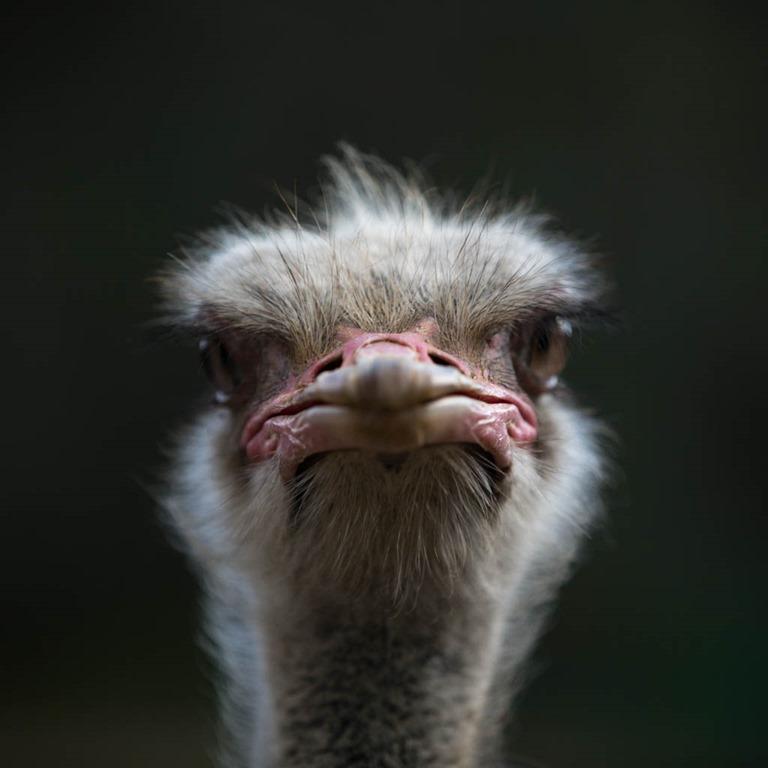 Day 13–Ostrich in Oudtshoorn