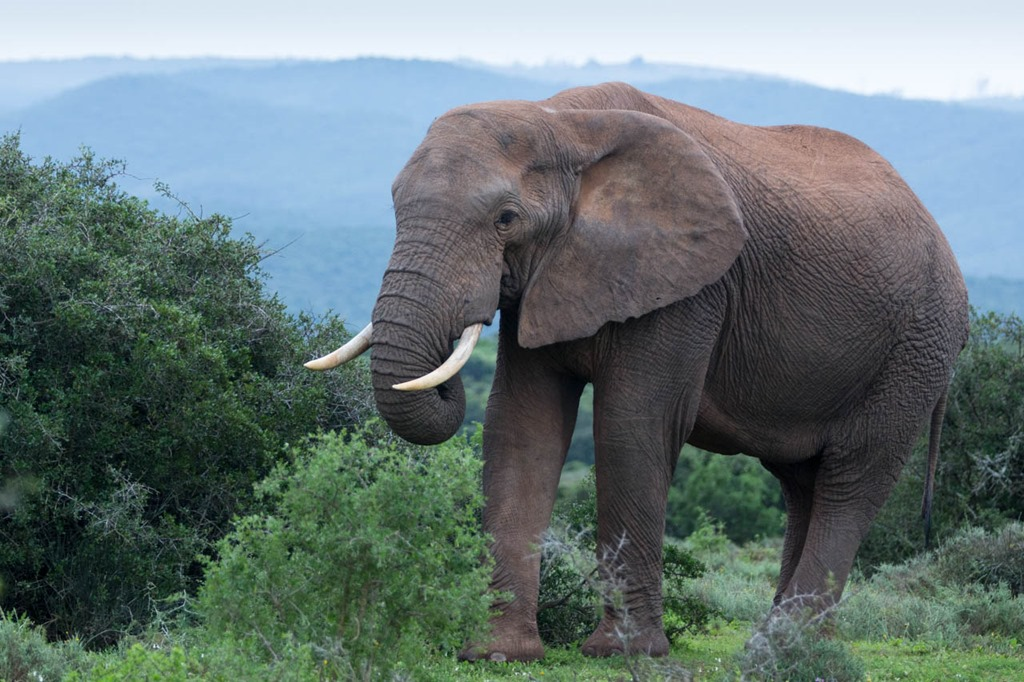Day 16–Addo Elephant park